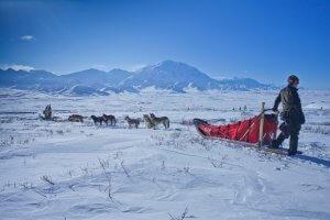 Alaska Wilderness - Dog Sled