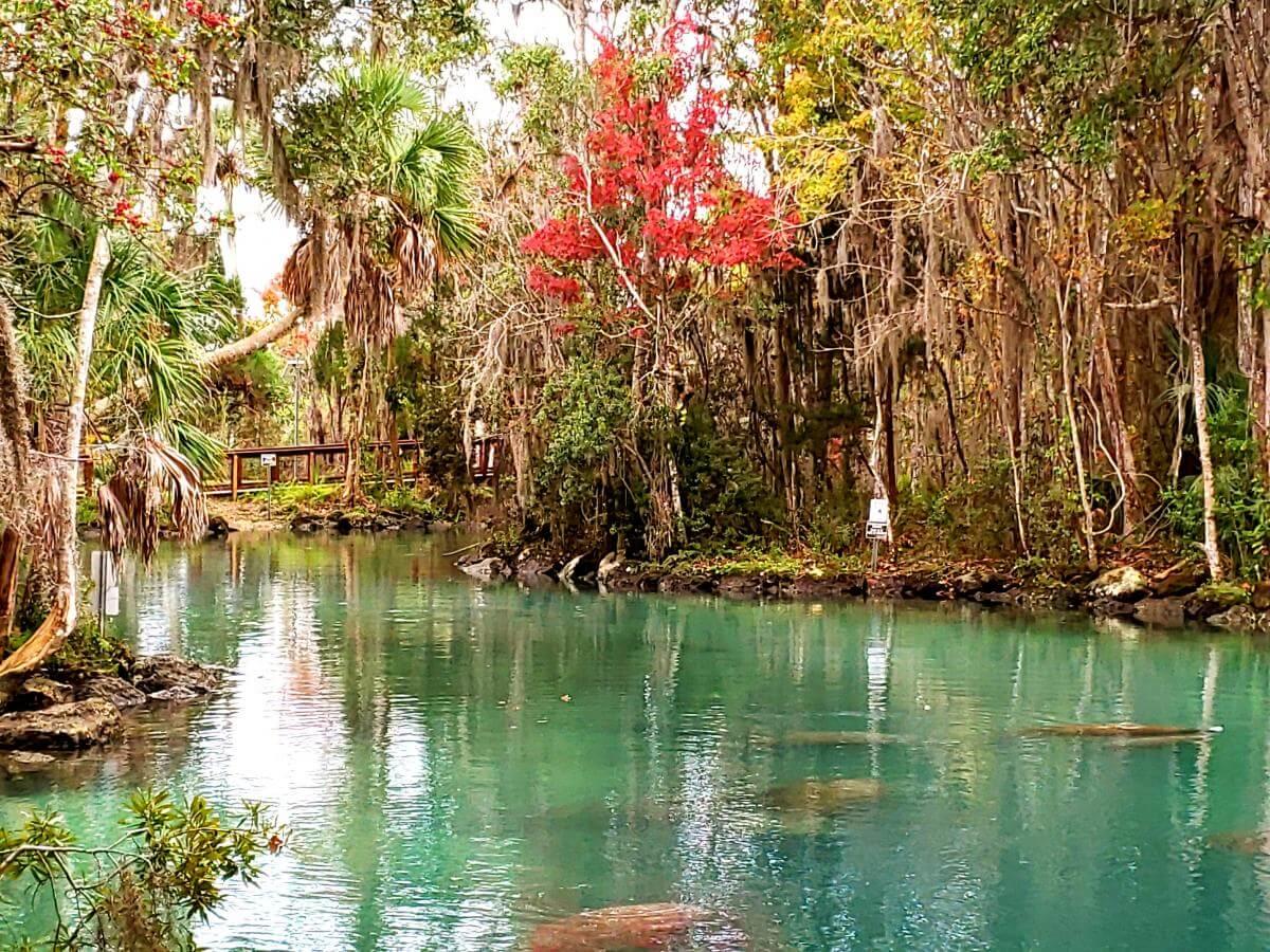Three Sisters Springs - Crystal River, Florida