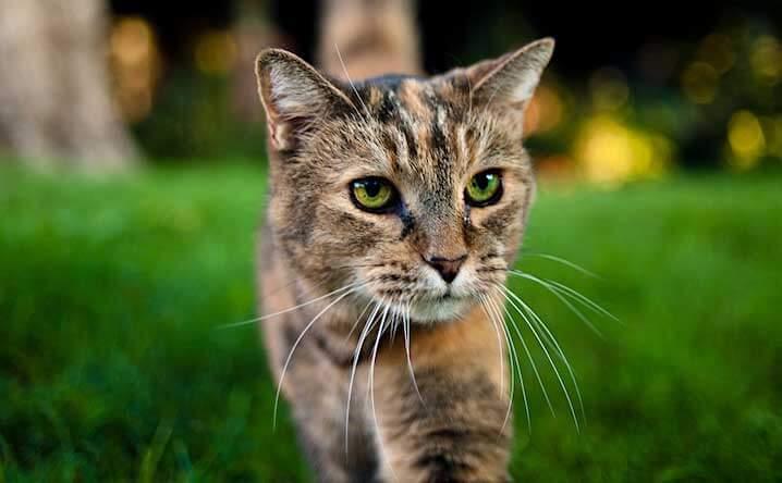 The Writer's Cat